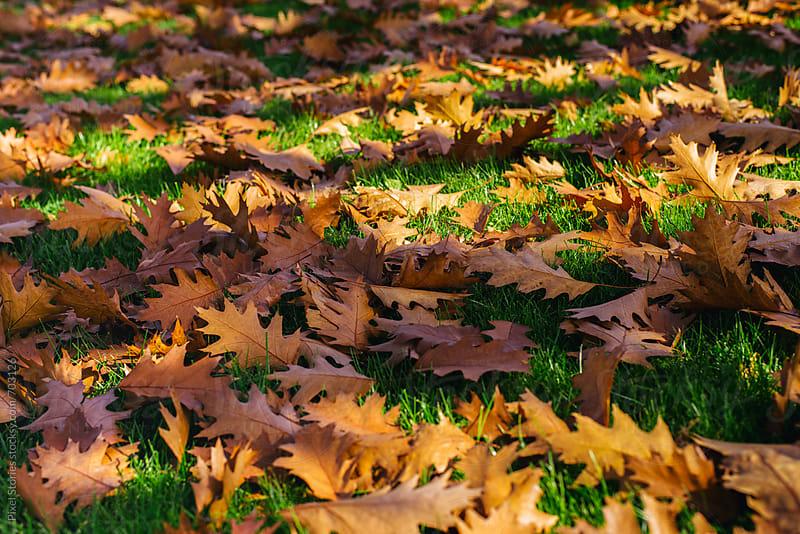 Fallen oak leaves on green meadow in autumn by Pixel Stories for Stocksy United