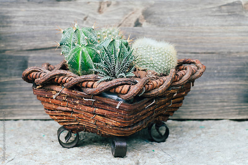 Plants on wooden background by Giada Canu for Stocksy United