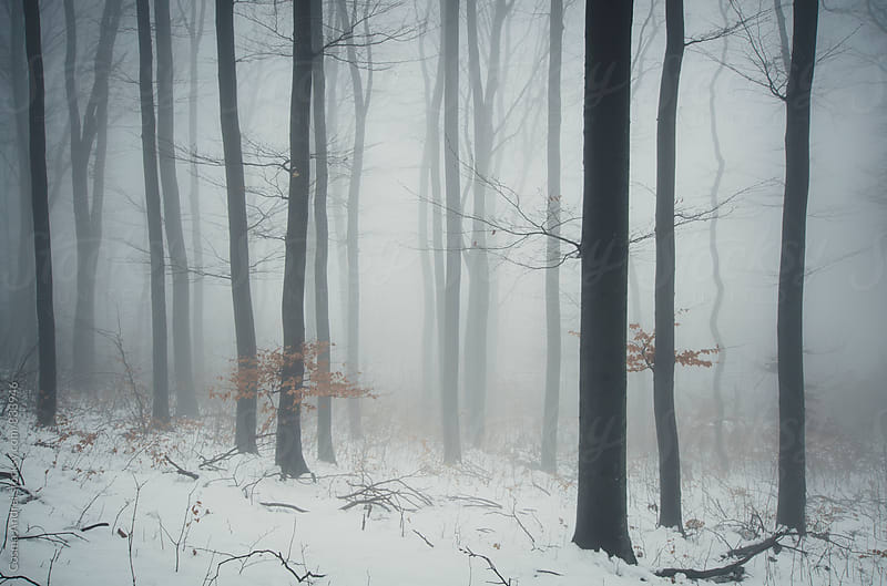 Winter woods by Cosma Andrei for Stocksy United