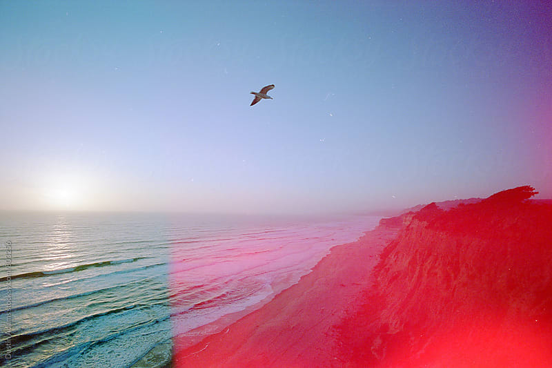 Bird Flies on the Pacific Coast  by Dustin Adams for Stocksy United