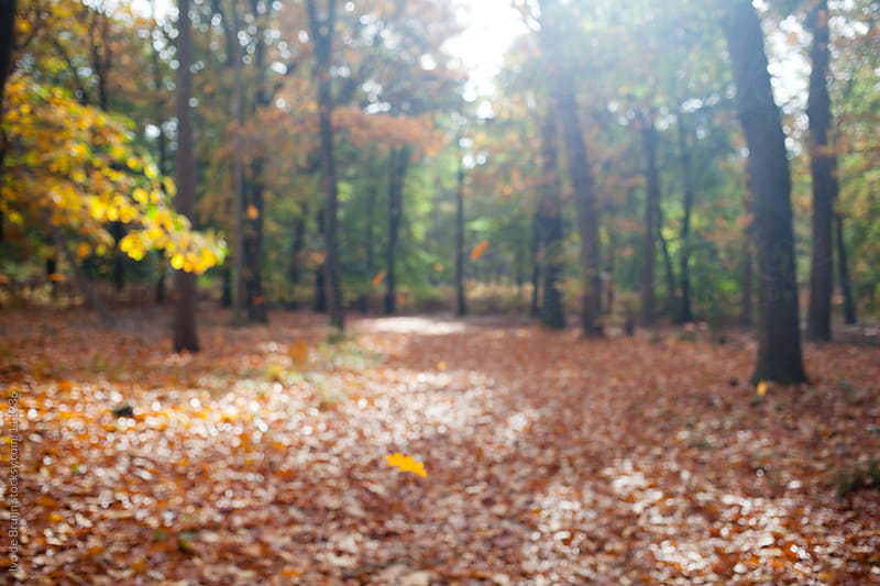 Blurry image of a colourful autumn forest with the ground covered with leaves  by Ivo de Bruijn for Stocksy United