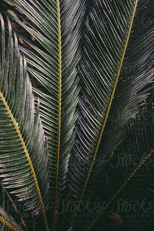Tropical Plant by Jasmin Elmi for Stocksy United