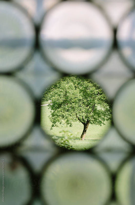 Summer tree through round hole in window by Alberto Bogo for Stocksy United