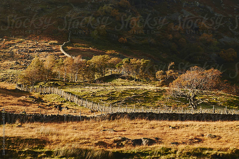 Sunlit trees. Seathwaite, Cumbria, UK. by Liam Grant for Stocksy United