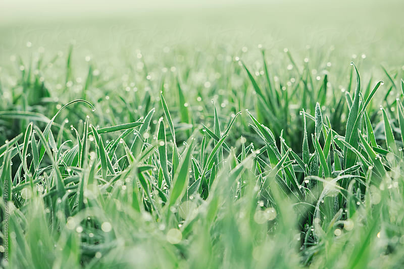 Frozen spring grass by Pixel Stories for Stocksy United