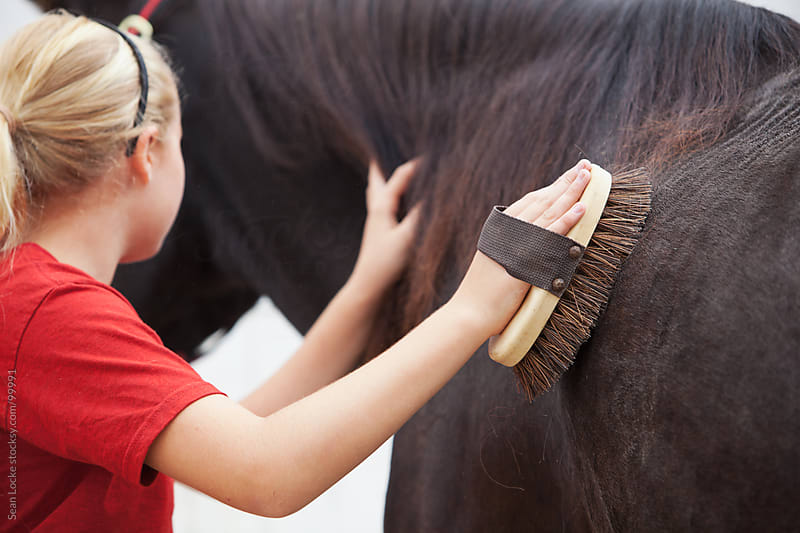 Equestrian: Focus on Hand Brushing Horse by Sean Locke for Stocksy United