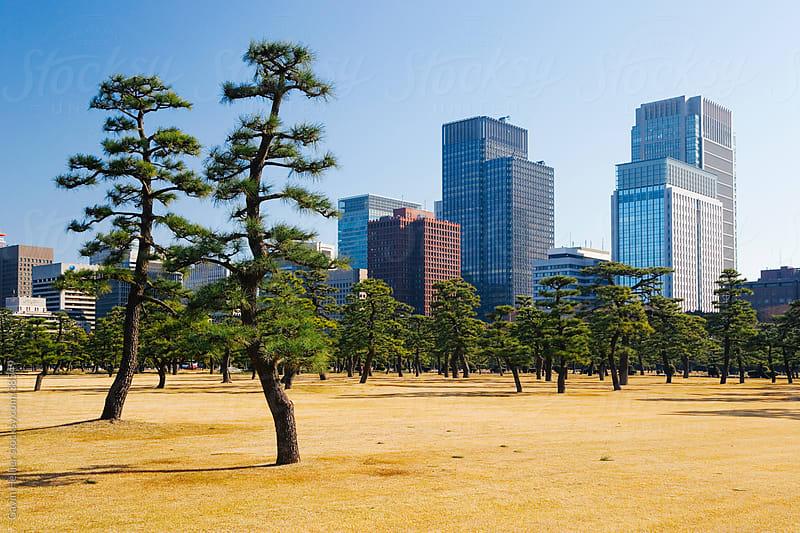 Asia, Japan, Honshu, Tokyo, by Gavin Hellier for Stocksy United