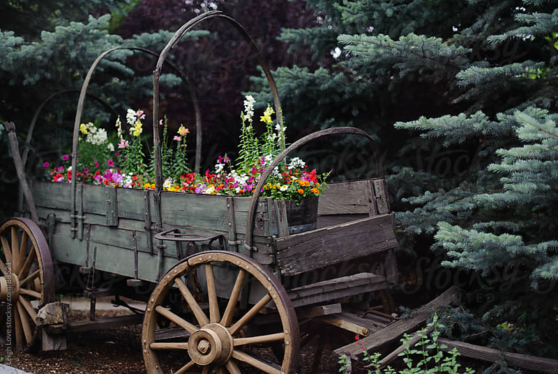 Flowers Planted in Old (Un)Covered Wagon  by Leigh Love for Stocksy United