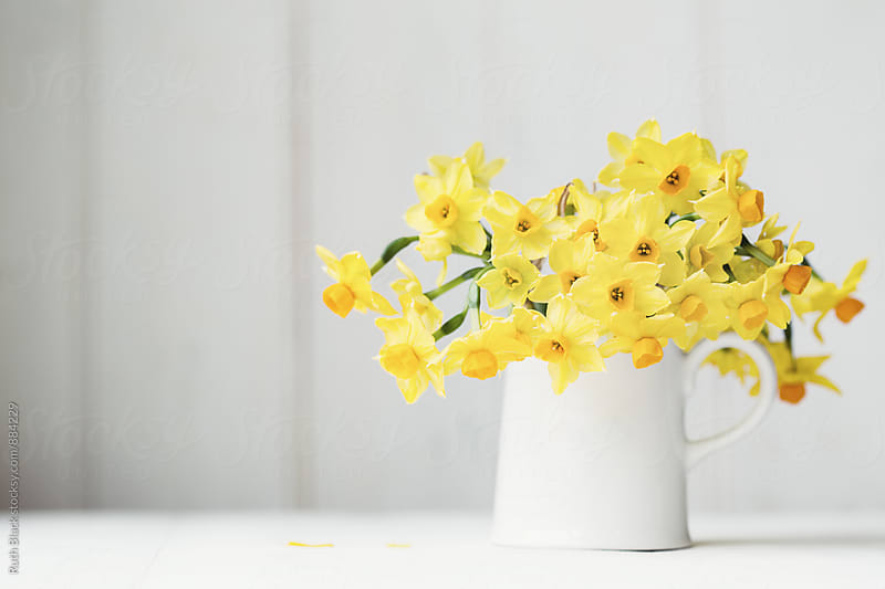 Daffodils in a jug by Ruth Black for Stocksy United