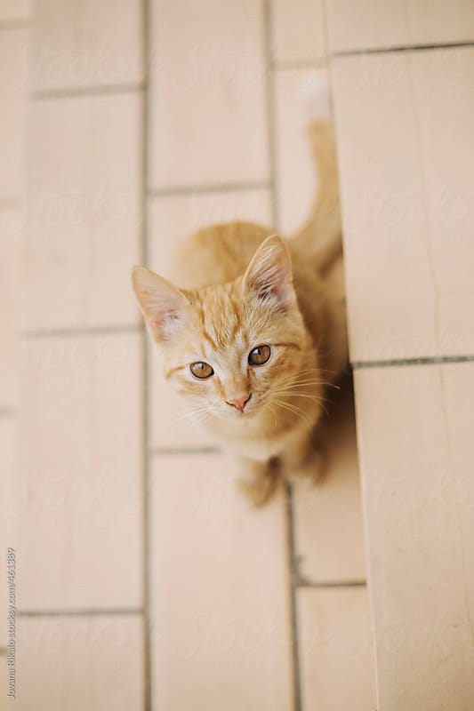 Adorable kitten looking at camera by Jovana Rikalo for Stocksy United