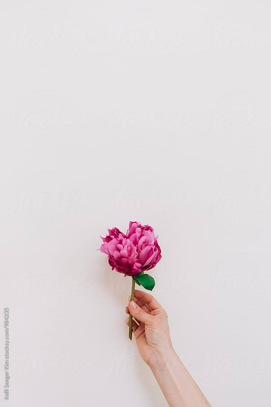 Hand holding pink peony by Kelli Seeger Kim for Stocksy United