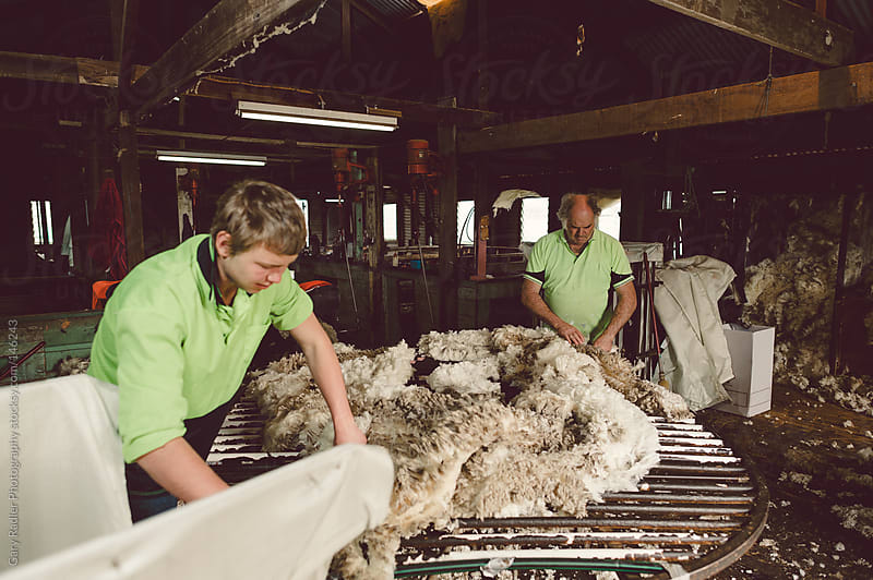 Sorting the Wool by Gary Radler Photography for Stocksy United