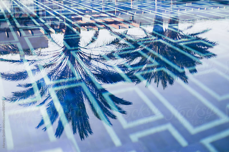 Wide shot of palm tree reflections on a blue swimming pool by Maresa Smith for Stocksy United