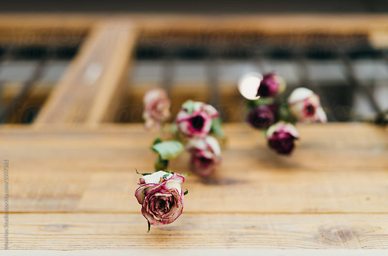 Close up of dried roses hanging on a window by MaaHoo Studio for Stocksy United