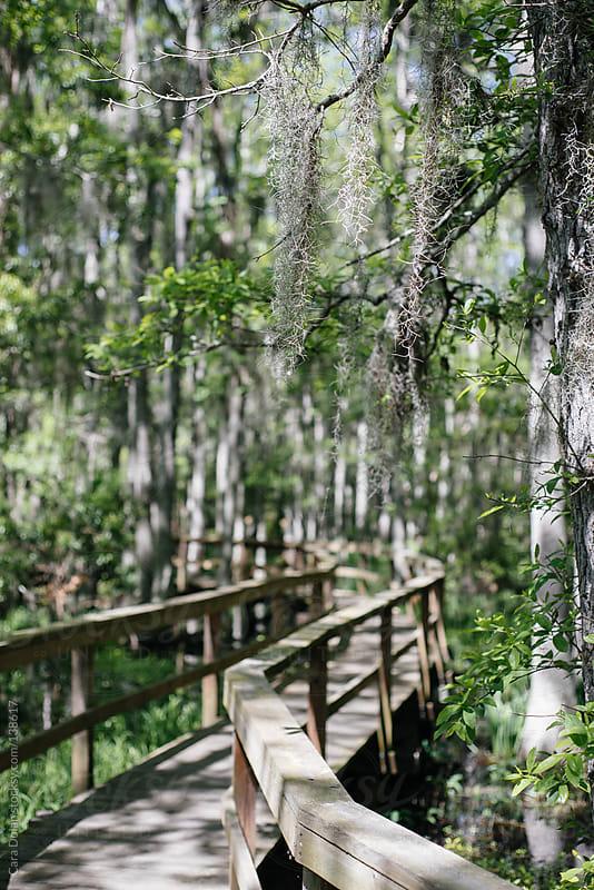 Boardwalk through a swamp by Cara Dolan for Stocksy United