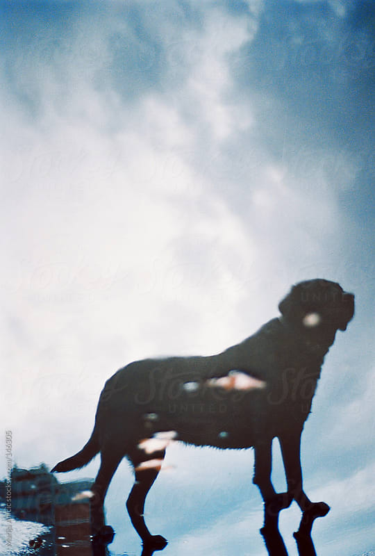 Reflection of dog in a water by Marija Anicic for Stocksy United