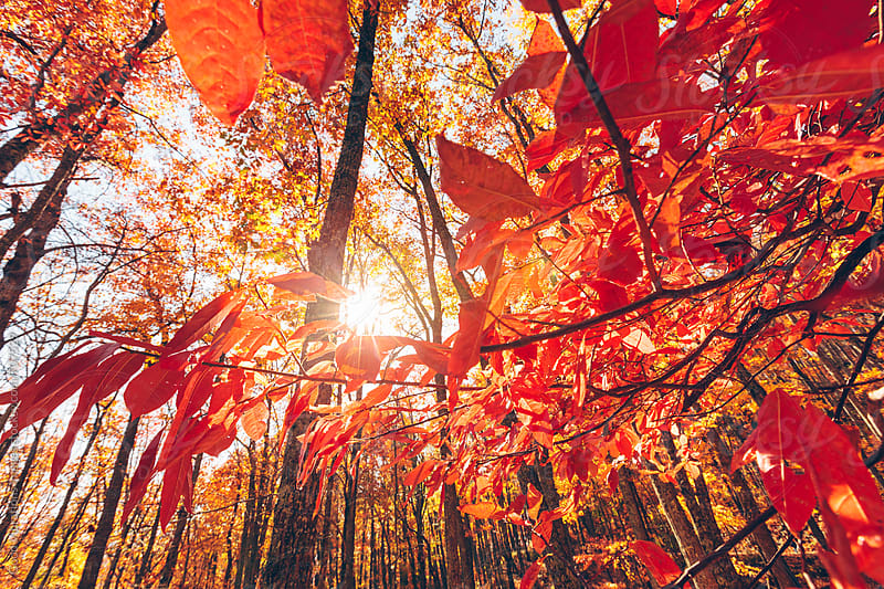 Beautiful colorful forest in Autumn by Good Vibrations Images for Stocksy United
