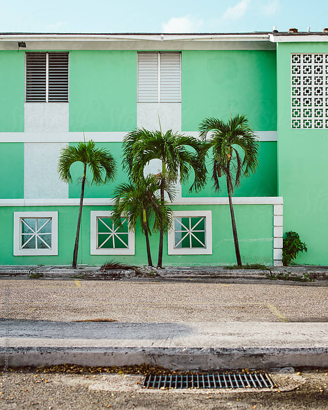 Palm Trees, Nassau by Ryan Dearth Photography for Stocksy United