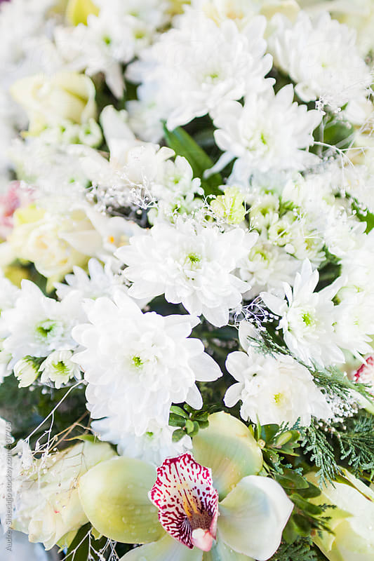 Bunch of white decorative flowers. by Audrey Shtecinjo for Stocksy United