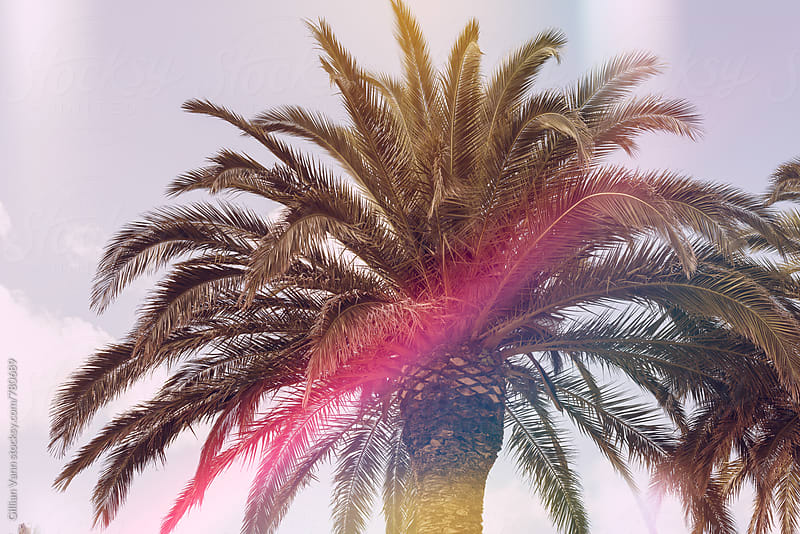 top of palm tree with light leak by Gillian Vann for Stocksy United
