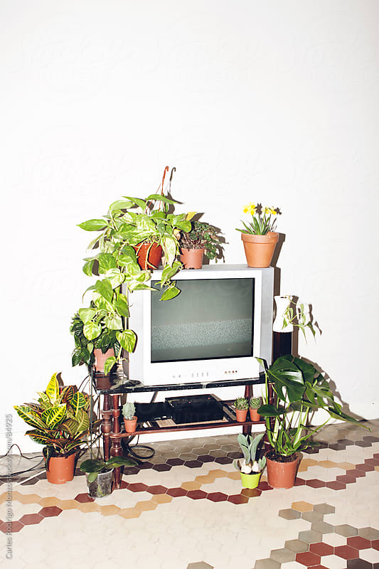 Television and plants by Carles Rodrigo Monzo for Stocksy United