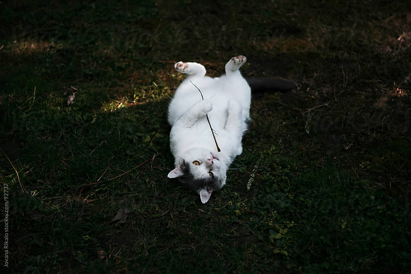 Lazy cat laying on grass and  holding twig with his pows by Jovana Rikalo for Stocksy United