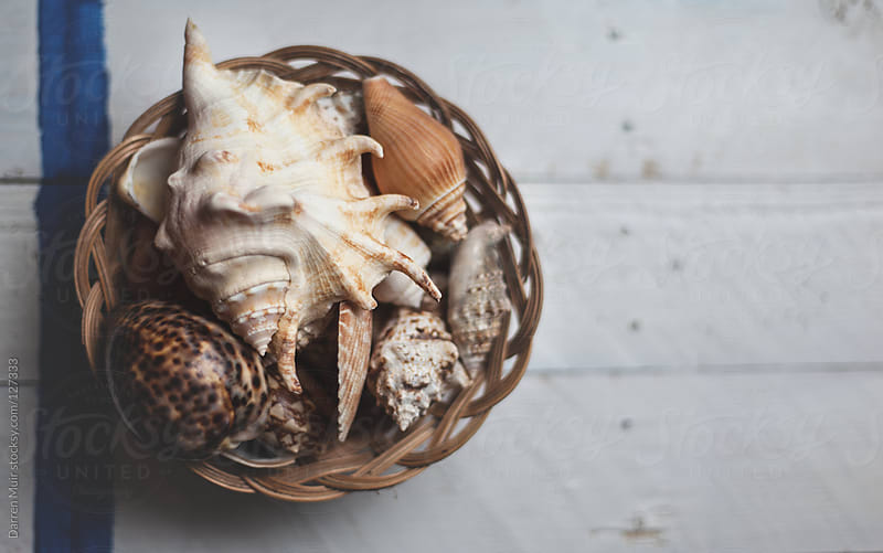 Harvested seashells by Darren Muir for Stocksy United