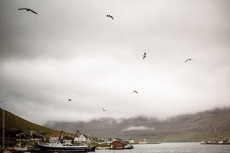 A Flock of Birds Fly Around a Harbor by Daniel Inskeep for Stocksy United