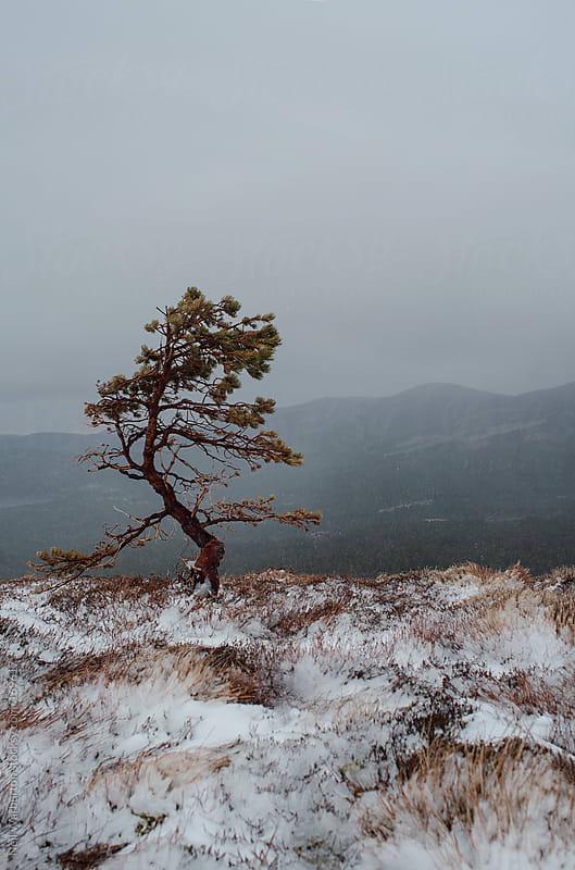 Lone Tree by Neil Warburton for Stocksy United