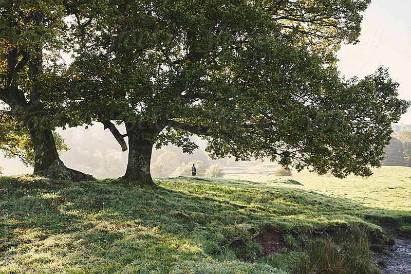 Female walking a footpath between trees on a misty morning. Elter water, Cumbria, UK. by Liam Grant for Stocksy United