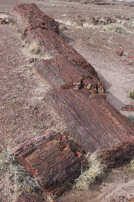 Petrified Wood by Adam Nixon for Stocksy United