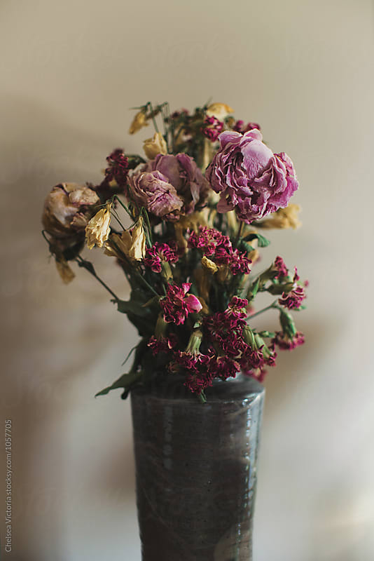 A vase of dried up flowers by Chelsea Victoria for Stocksy United