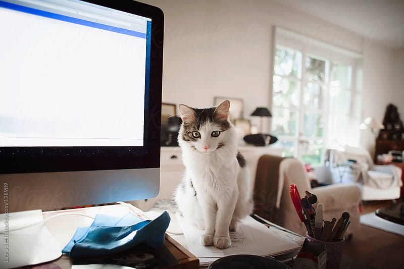 Kitten sits on working table close to a computer by Laura Stolfi for Stocksy United