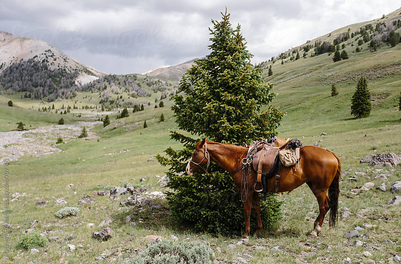 Horse tied to tree waiting for owner by Matthew Spaulding for Stocksy United