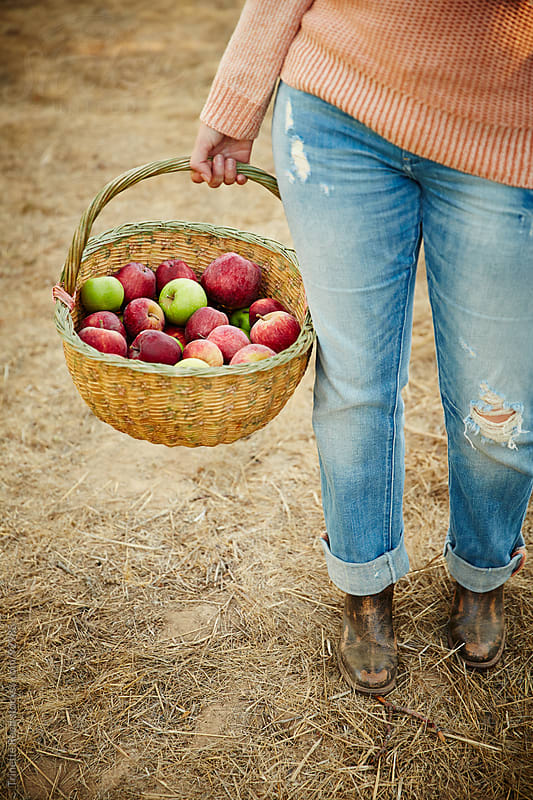 Woman farmer holding basket of fresh picked apples by Trinette Reed for Stocksy United