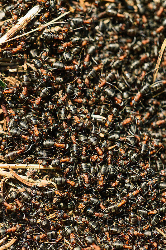 ant colony by Peter Wey for Stocksy United