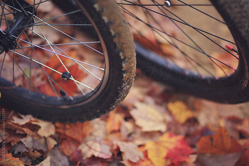 Bike Tires In Autumn by ALICIA BOCK for Stocksy United