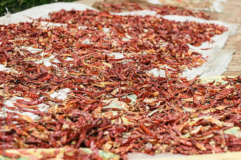 Red cayenne peppers drying on the sun by Alejandro Moreno de Carlos for Stocksy United