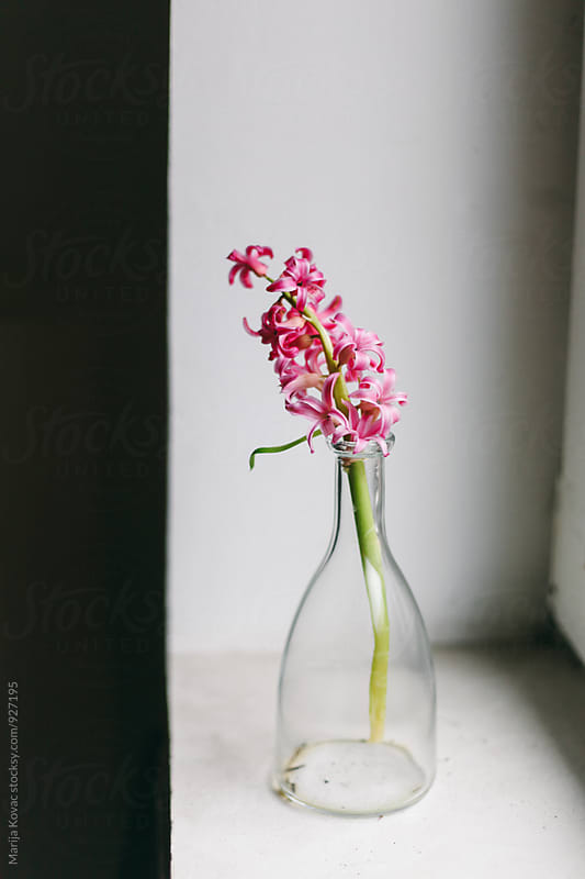 Pink flower in a bottle, vertical by Marija Kovac for Stocksy United