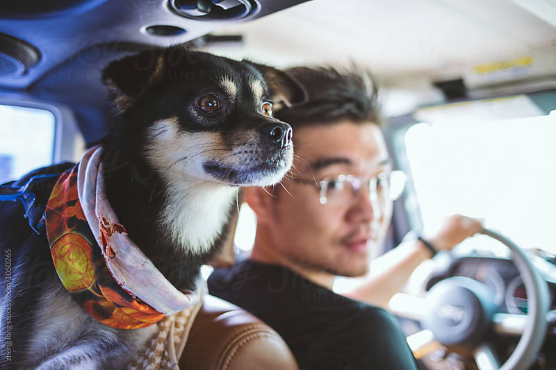 Dog and man in the car by zheng long for Stocksy United