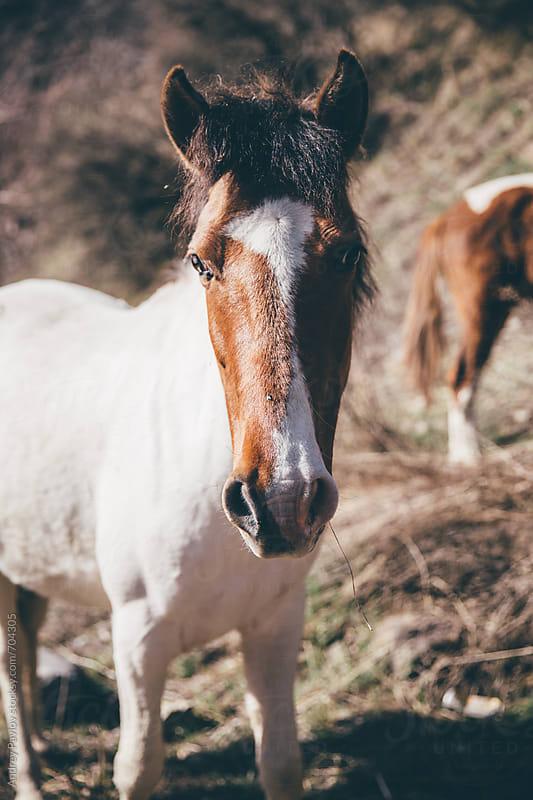 Wild horses, Kazakhstan by Andrey Pavlov for Stocksy United