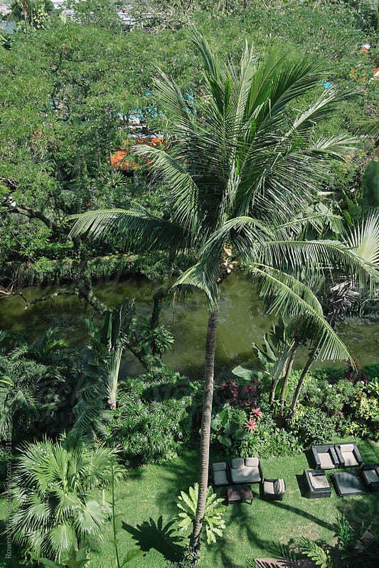 Looking down onto lush garden settling with Palms by Rowena Naylor for Stocksy United