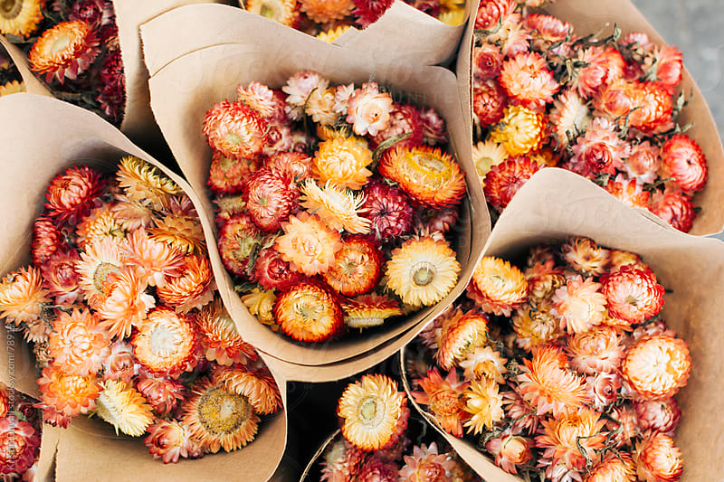 Autumnal dried flower bouquets by Kristin Duvall for Stocksy United