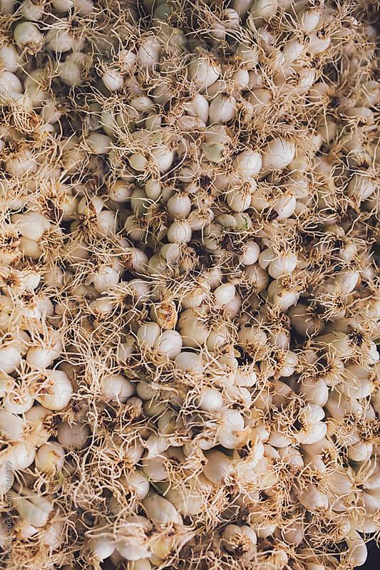 Garlic by Lumina for Stocksy United