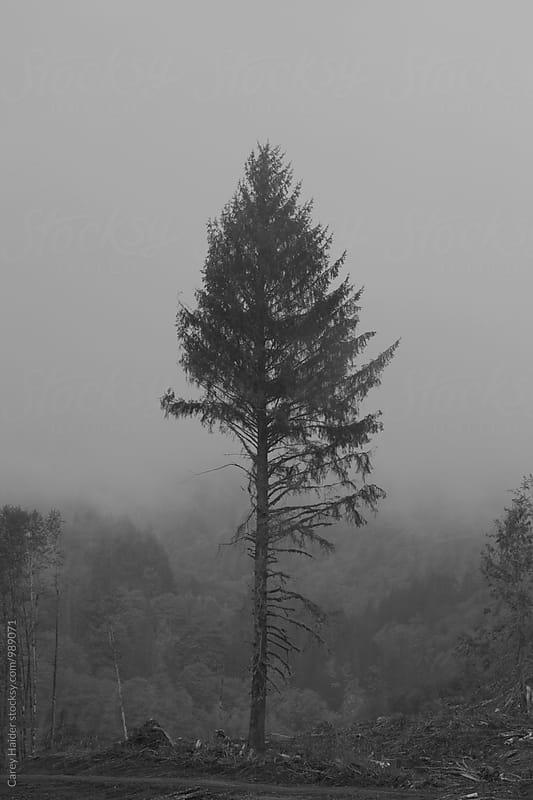 Lone Tree In Fog by Carey Haider for Stocksy United