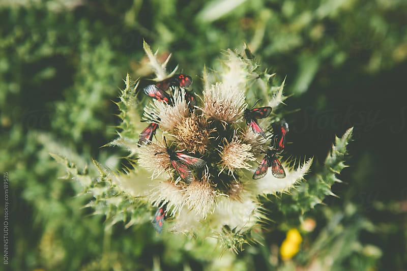 High mountain vegetation. by BONNINSTUDIO for Stocksy United