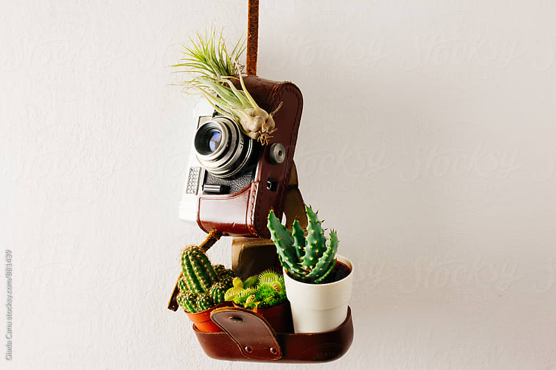 Plants on an old analog camera by Giada Canu for Stocksy United