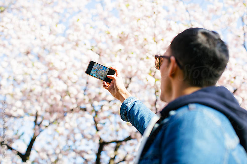Man taking a photo of a cherry blossom in spring. by BONNINSTUDIO for Stocksy United