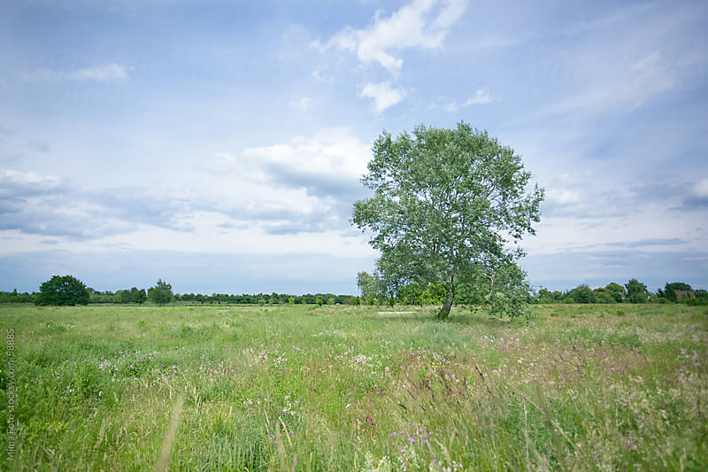 Lonely Tree in Wild Flower Field by Mima Foto for Stocksy United