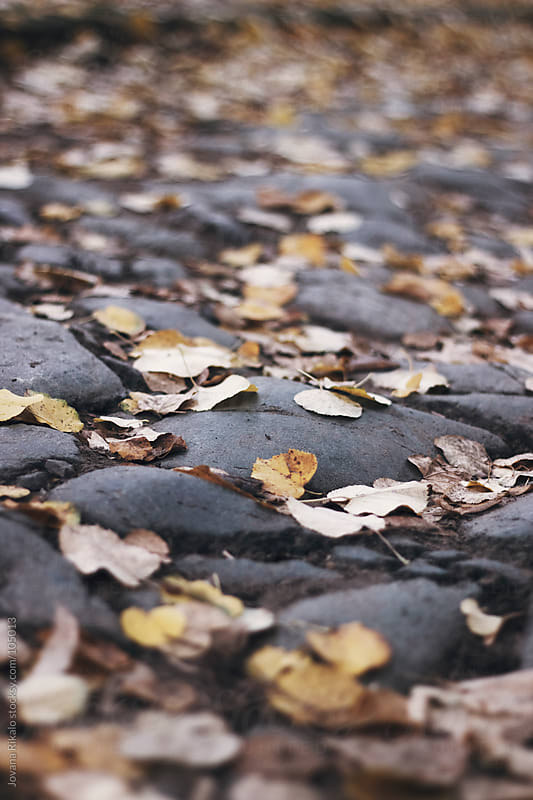 Leaves on concrete by Jovana Rikalo for Stocksy United